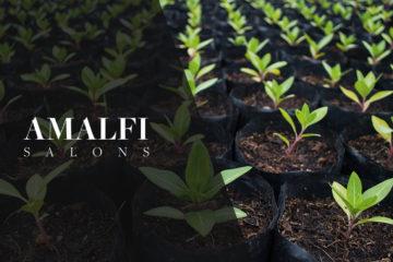 Amalfi Salons plants 1443 trees since April the 13th!